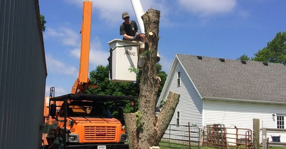 Tree Removal in Crawfordsville, IN