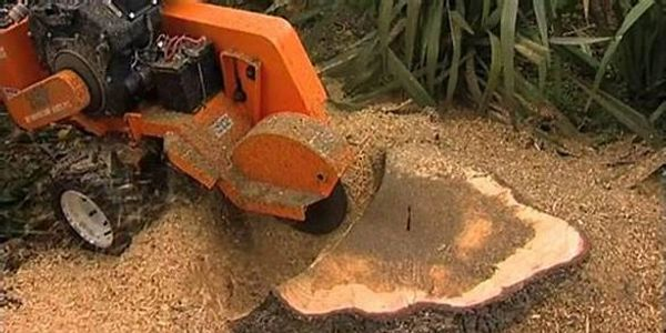 Stump Grinding in Darlington, Indiana