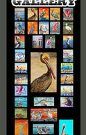 colorful pelicans, ibis, heron, prints and original oil paintings, small and large , big art