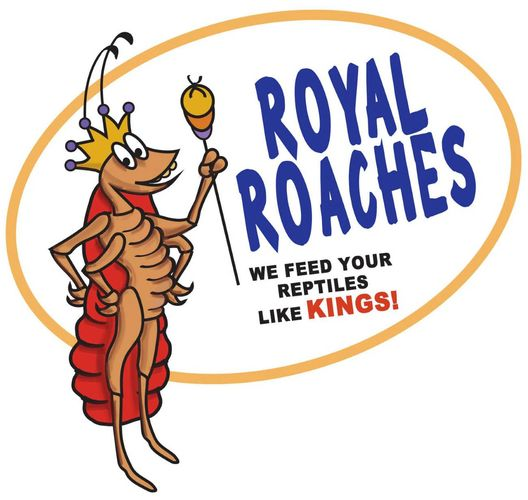 royal roaches, we feed your reptiles like kings