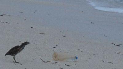 Wildlife sharing the beach with a   washed up plastic bottle