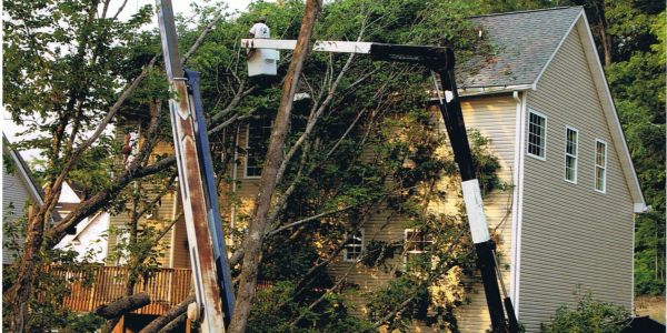 Remove fallen tree from house