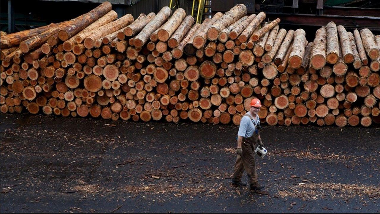 Stimson Lumber