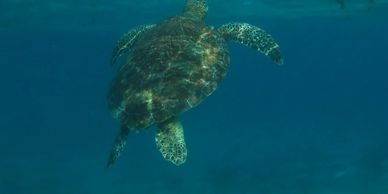 Sailing San Pedro Belize at Hol Chan Marine Reserve you get to see turtles .