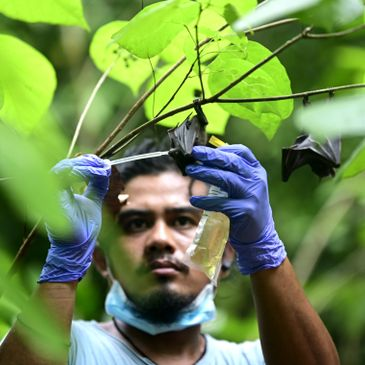 CS Staff Solomon Calago observing bat species for KPF Knowledge is Power to the Forest Project