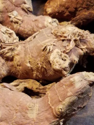 MANDRAKE OFFICINALIS ON SALE AT HIGHWINDS HERBS