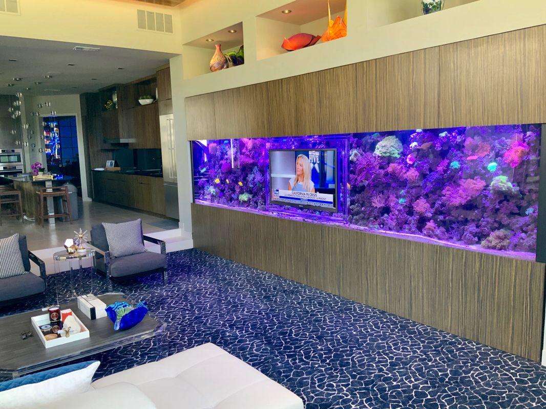 Aquarium Headquarters Aquarium Services Fish Tank Cleaning Aquarium Headquarters