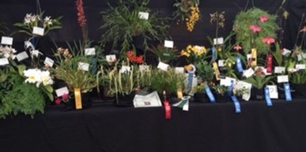 Our Prized Plants from the AOS Spring Show in Denver