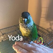 Colorado Springs Exotic Bird Pet Sitting Macaw Conure Cockatoo Eclectic Amazon African Grey