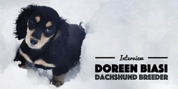 Doreen Biasi interview Akcdachshundny