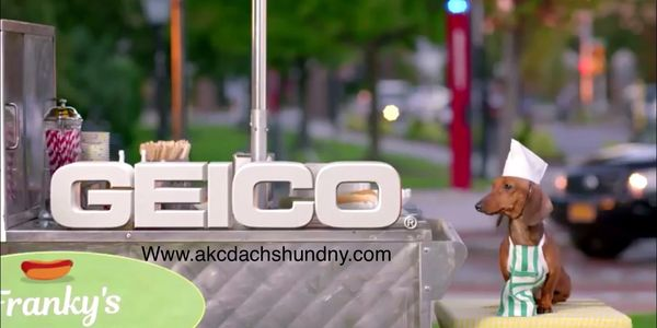 Geico commercial with hot dog dachshund