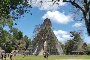 Guatemala Tikal Birding and Archaeological visit with GUATE 4 YOU