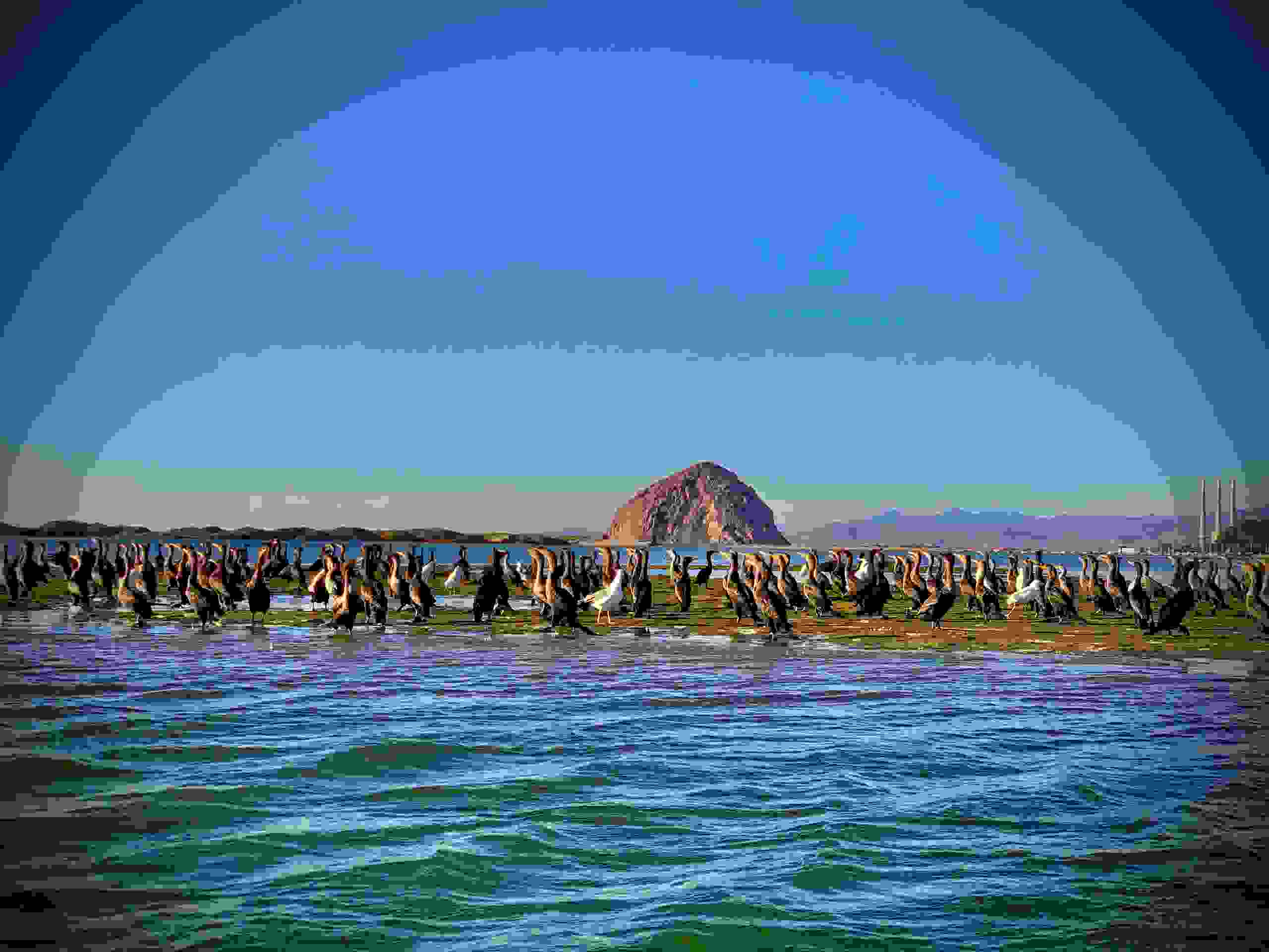 The ancient volcano core that is Morro Rock makes an incredible back drop for any occasion.