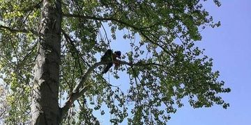 Tree Surgery- JB Countryside Services Cheltenham Gloucestershire
