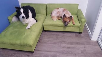 All of our Luxury Doggy suites are  very spacious and furnished with luxury doggy beds