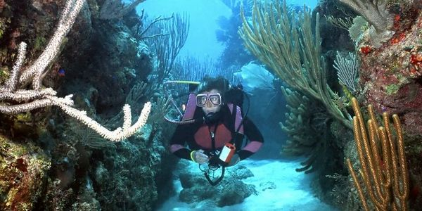 tampa bay scuba diving training classes trips nitrox tampa sarasota clearwater brandon valrico