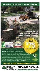 Tree Service in Simcoe County