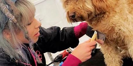 Dog Grooming Courses Dog Grooming Schools Animal Care Colege