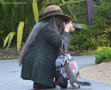 Artist Pat Jow Kagemoto photographing some of her flower subjects in the botanical garden.