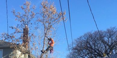 Line Clearance, Solar Panel, Tree Pruning, Trimming, Tree Removal, Dangerous Tree,