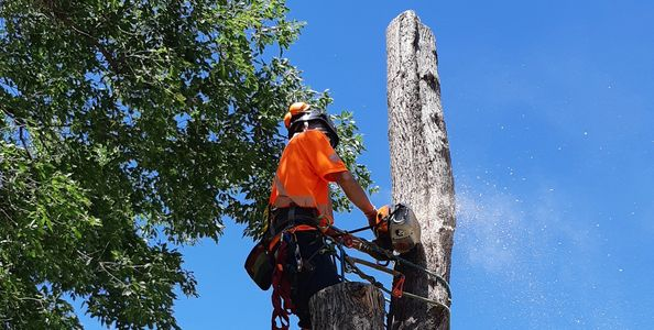 Tree Removal, Arborist, Tree Service, Tree Care, Pruning, Trimming, climbing, Chainsaw