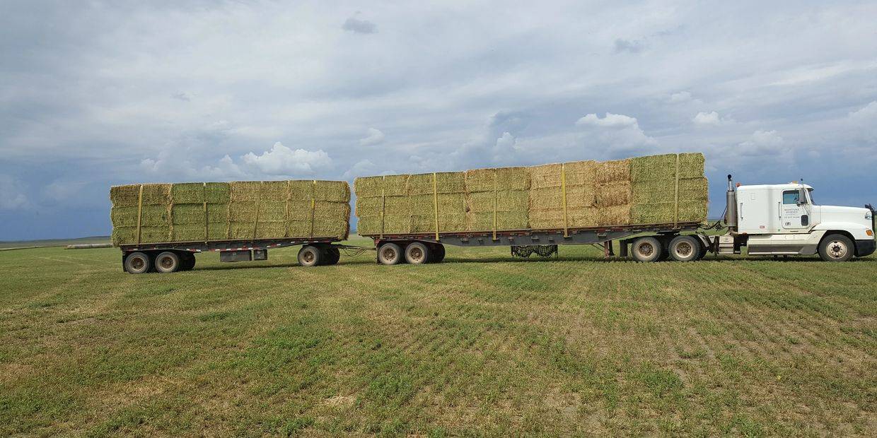 buy and sell hay, alfalfa, oat/grain hays, Longhorn Video Auction, Kail Mantle Auctioneer, equipment, trucks, trailers, farm & ranch, live and online timed auctions