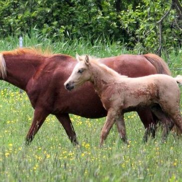 Dolly and her colt