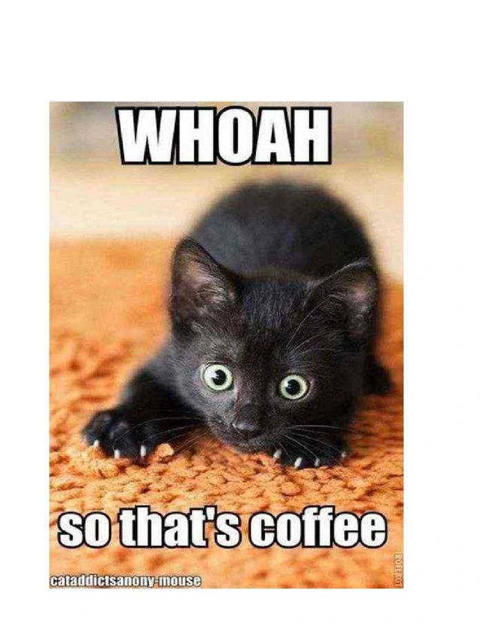 funny black kitten after having a drink of coffee!