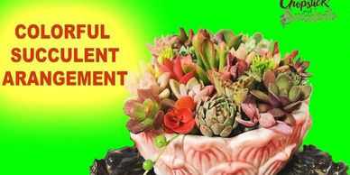 Succulent cuttings , succulent arrangement using cuttings, succulents
