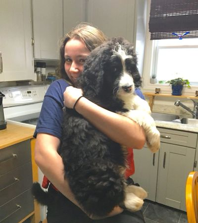 Teen holding Bernedoodle puppy