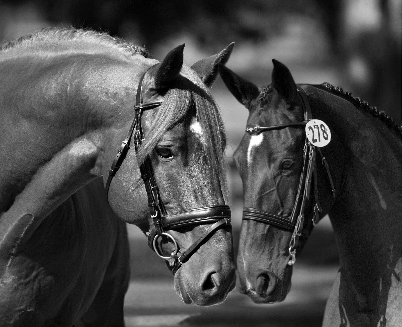 Dressage partners Oisin and Medea. Forever in our Hearts.