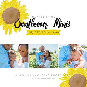 Sunflower Minis  Lickinghole Creek Brewery Photography Sunflower Portraits Richmond
