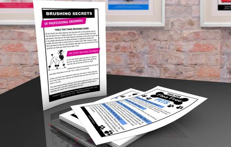 Brushing education pamphlet and flea cycle pamphlet templates in the kit are 100% editable