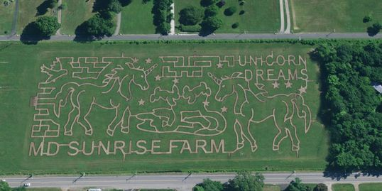 The Maryland Corn Maze will host 8 acres of UNICORNS this Fall in Gambrills MD! #FallFestival #Fall