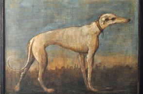 Painting of Tiepolo's greyhound, ancestor of Piccolo Fortunato