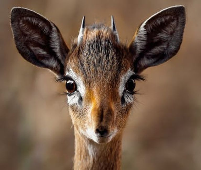 baby antelope,  animal communication workshop  pet psychic    pet services