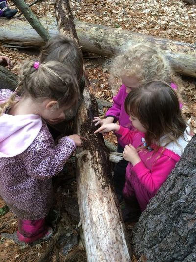Nature-based preschool, forest preschool, outdoor education, nature play, child-led curriculum, nature-based preschool consulting, outdoor classroom