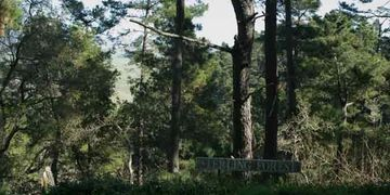 Sterling Forest property, a preserve of Montery Pine and coast live oak