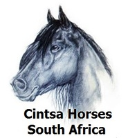 Cintsa Horses and the New Hampshire Rescue & Rehabilitation Cente