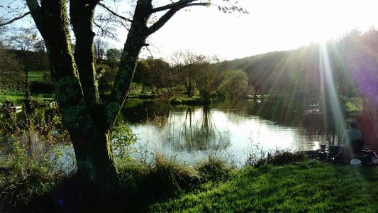 Carp and Silver's Lake, West Devon, Cornwall, Milemead Fisheries