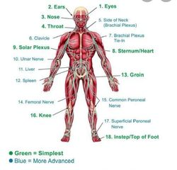 The body is divided into three sections: high, middle, and low. Each section contains vital targets