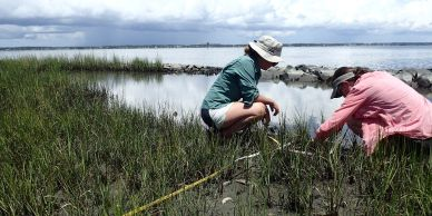 M Taggart and K Signor collect vegetation data at a living shoreline in Pine Knoll Shores, NC