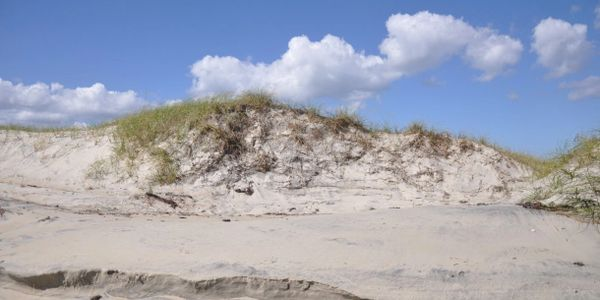 Recovery of eroded foredune along North Core Banks, Cape Lookout National Seashore, NC, October 2015