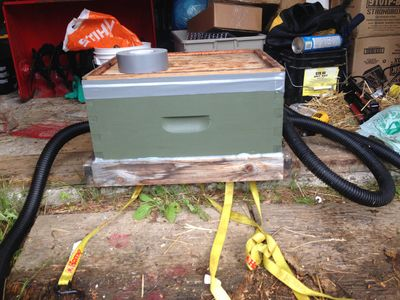 Homemade bee vacuum is a non-lethal way to remove honeybees and relocate the hive