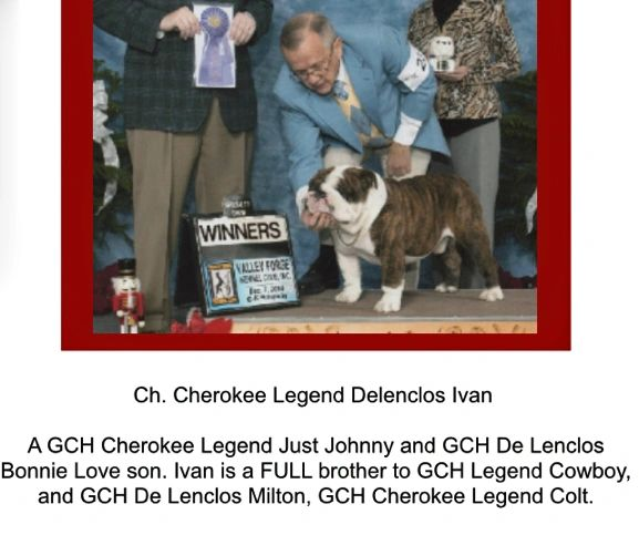 We DO NOT own this dog.  This is Cowboy's AKC Champion grand Sire
