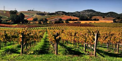 Napa Sonoma Wine Tour