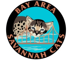 Bay Area Savannah Cats