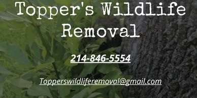 (wildlife removal in plano texas) (wildlife control in plano texas) (dead animal removal in plano)