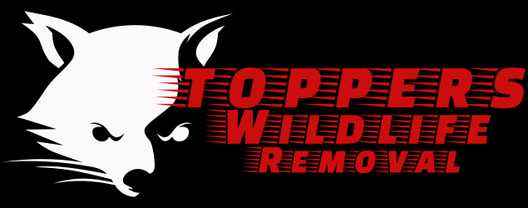 Topper's Wildlife Removal