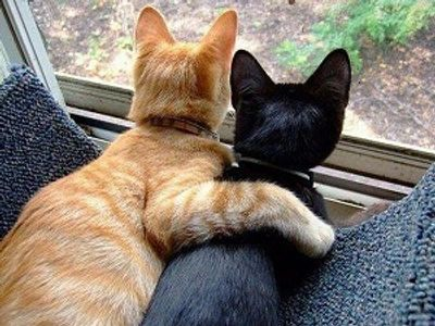 gold cat with arm around black cat looking out window